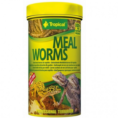 Tropical Meal Worms