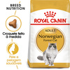 Royal Canin Norwergian Forest